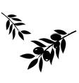 olives black vector image