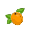 Apricot Isolated on White vector image vector image