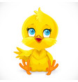 cute bachick sit on a white background vector image vector image