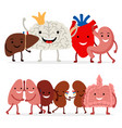 Cute human internal organs isolated on