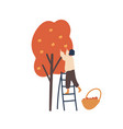 girl gathering autumn harvest flat vector image