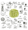 fruits hand drawn sketches isolated on white vector image