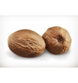 Nutmeg icons vector image vector image