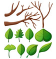 tree branches and green leaves vector image vector image