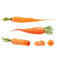 watercolor carrot set vector image vector image