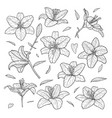 beautiful monochrome black and white set lily vector image vector image