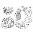 sketched of watermelon and pitahaya fruits vector image vector image