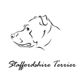 Staffordshire Terrier vector image