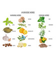 ayurvedic warming and cooling herbs banner vector image