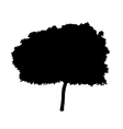 Young Tree Silhouette vector image vector image