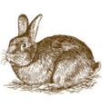 engraving bunny vector image