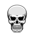 Gray human skull on white vector image