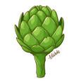 artichoke vegetable hand drawing vector image