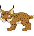 cartoon lynx isolated on a white background vector image