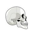 skull profile gray skulls picture on white vector image vector image