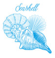sea shells hand drawn vector image vector image