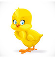 cute yellow cartoon chick isolated on a white vector image vector image