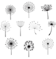 Floral Elements with dandelions for design vector image vector image