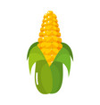 isolated corn design vector image