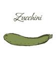 tasty veggies zucchini vector image vector image