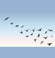 Bird flock flying over blue sky background animal