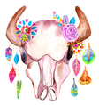 Watercolor bull skull with flowers and feathers vector image