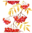 Watercolor rowan pattern vector image