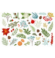 christmas plant and floral set include vector image