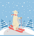 cute polar bear happy skiing with tree background vector image