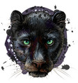 panther artistic sketchy color portrait vector image