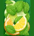 refreshing lemon orange vector image vector image