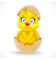 fluffy little cartoon chick hatched from an egg vector image vector image
