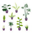 isometric potted plants for indoor design vector image vector image