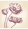 poppies hand drawn realistic vector image