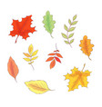 set in style hand drawing autumn and leaves vector image