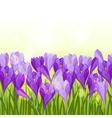 Spring flowers crocus seamless pattern horizontal vector image
