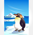 Wild animal set 25 of 32 - penguin vector | Price: 1 Credit (USD $1)