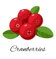 Cranberries isolated icon vector image vector image