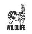 hand drawn zebra with wildlife text isolated on a vector image vector image