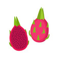 red dragon fruit whole fruit and half vector image vector image
