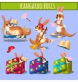 Home care cute kangaroo and gift boxes vector image