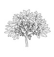 cocoa tree ink sketch vector image