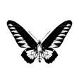 hand drawn rajan brookie birdwing butterfly vector image vector image