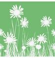 chamomiles vector image