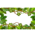 frame and background green vines leaves and vector image vector image