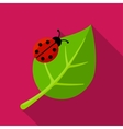 Ladybug on leaf icon vector image