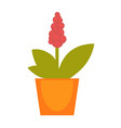 bright red potted flower vector image