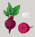 digital detailed line art color beet vector image