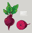 digital detailed line art color beet vector image vector image