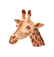 giraffes head vector image